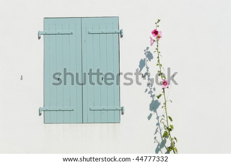 Rose in front of a white wall - stock photo