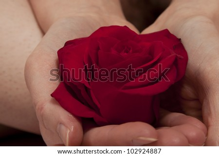 rose in hand ~2