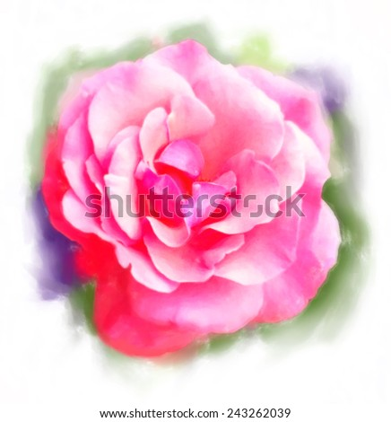 Rose in pastel drawing style on white background - stock photo
