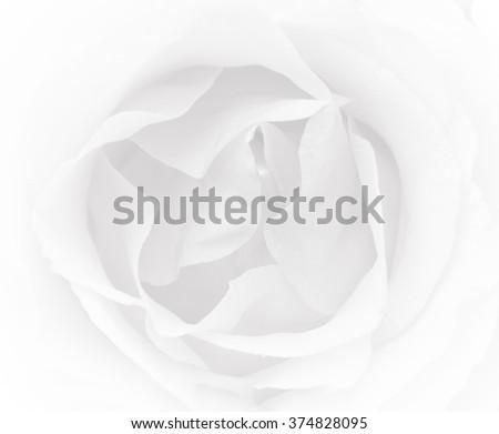 rose natural rose flower pattern background color filters Valentine's Day designed for - stock photo
