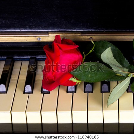 rose on a piano - stock photo