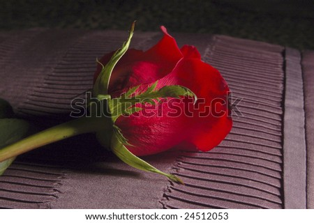 Rose on Bedding - stock photo
