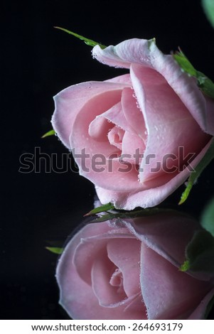 rose on black background with reflection - stock photo