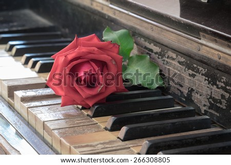 Rose on vintage antique wood piano  - stock photo