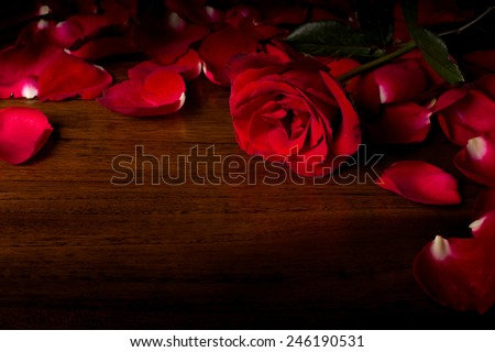 Rose on wood floor background. Give rose to darling in valentine's day. or send love to marry. - stock photo