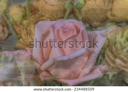 Rose painted against textured background - stock photo