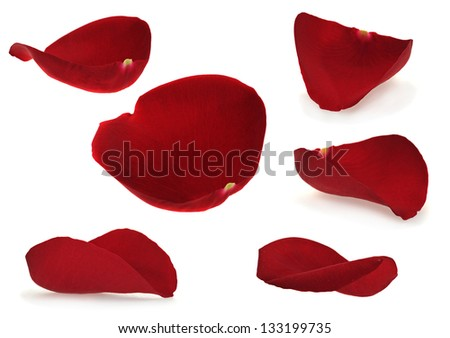 Rose petal collection isolated on white