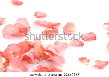 Rose petals - stock photo