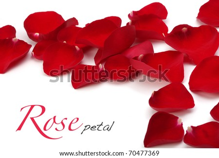 rose petals - stock photo