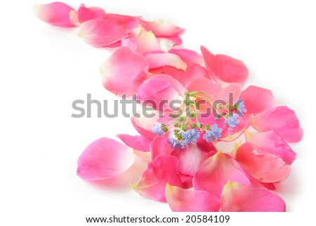 rose petals and forget me not flower