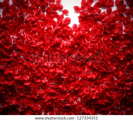 Rose petals background on white ground - stock photo