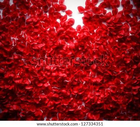 Rose petals background on white ground - stock photo