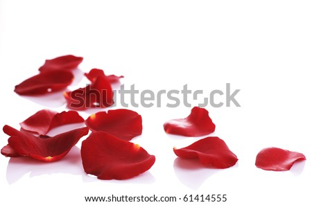 Rose Petals Border - stock photo
