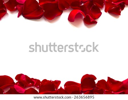 Rose Petals Border, isolated on white background - stock photo
