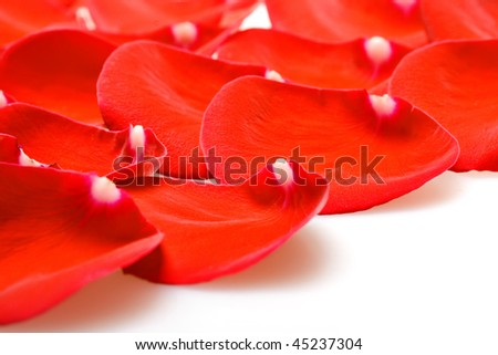 Rose petals for valentine's day.