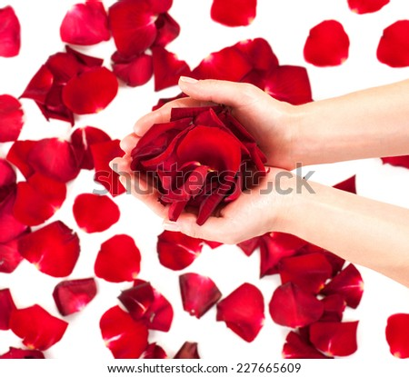 Rose petals in female hands over white background. Aromatherapy, spa concept. Beauty woman's hands taking heap or red roses petals - stock photo