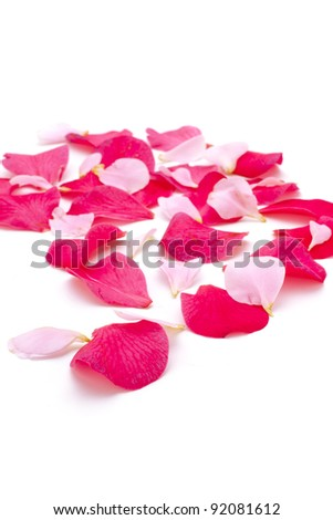 Rose petals, isolated on white, copy space