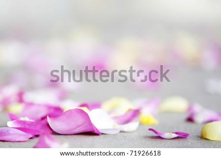 rose petals on sidewalk - stock photo