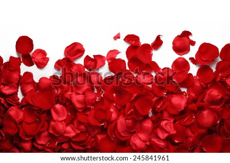 Rose petals on white ground