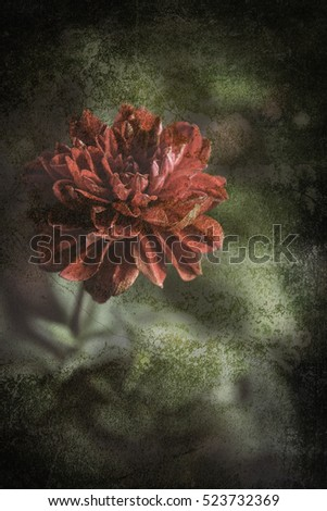 Rose picture look old and Rose Vintage Flowers