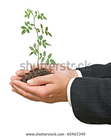 rose plant in hands