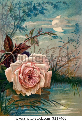 Rose reflecting in moon light - circa 1890 Mother's Day greeting card illustration