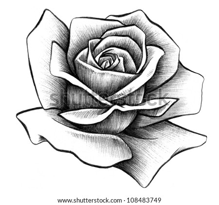 Rose Rendering - stock photo