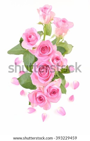 Rose. Roses of love. Roses.Pink rose. Roses. Photo of roses. Rose. Roses on white background. Beautiful pink roses. Roses gift. Pink roses on white, Bouquet of  roses, with petals. Roses for mother. - stock photo