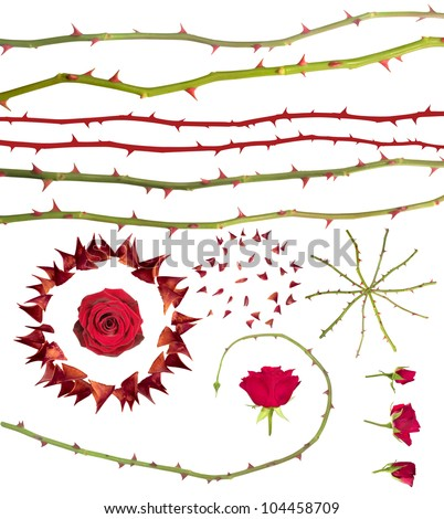 Rose thorns collection, isolated on white. Clipping paths for all photographed elements included, instead of the large thorns circle with the rose in it and the rotated rose lines that have no paths. - stock photo