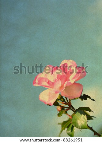 Rose, vintage background - stock photo
