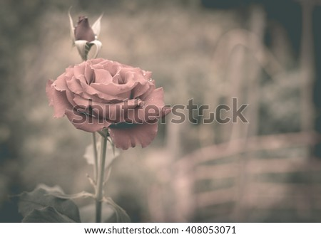 Rose vintage style,alone,broken heart - stock photo