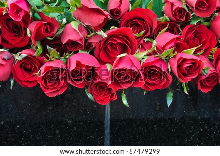 Rose with fountain - stock photo