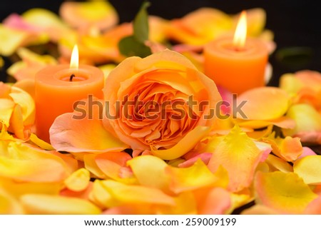 Rose with many rose petals with two candle-black background  - stock photo
