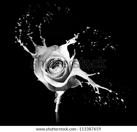 rose with red splashes on black background - stock photo