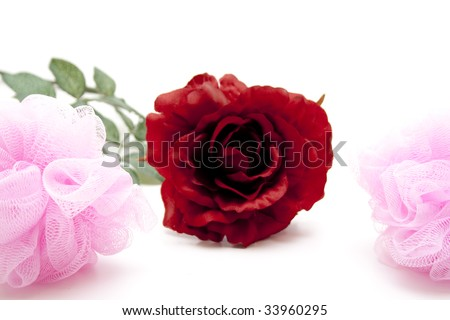 Rose with sponge