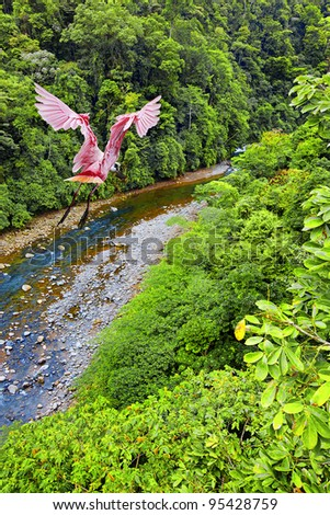 Roseate Spoonbill flying over the Costa Rican jungle - stock photo