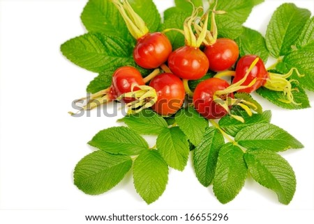 Rosehips - stock photo