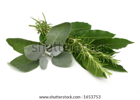 Rosemary, bay laurel and sage on white background - stock photo