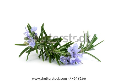 Rosemary branch and flowers - stock photo