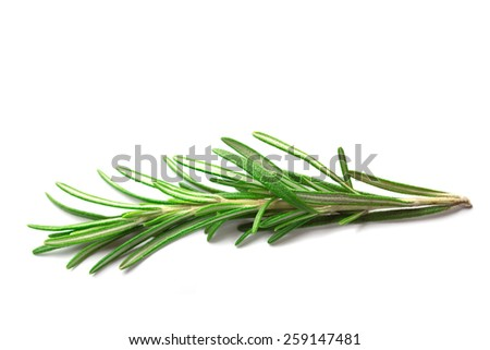 Rosemary branch isolated - stock photo