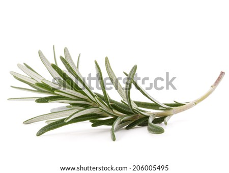 rosemary herb spice leaves isolated on white background cutout - stock photo