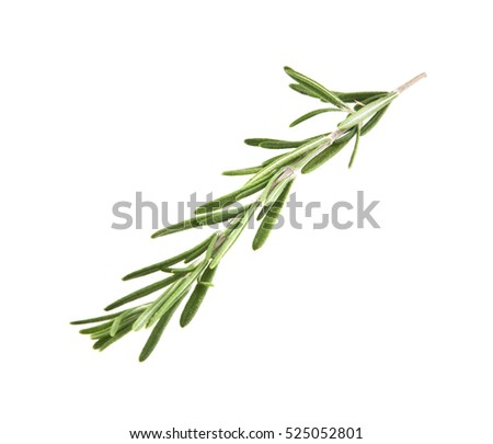 rosemary isolated on white background closeup