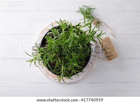 Rosemary on a white wooden background - stock photo