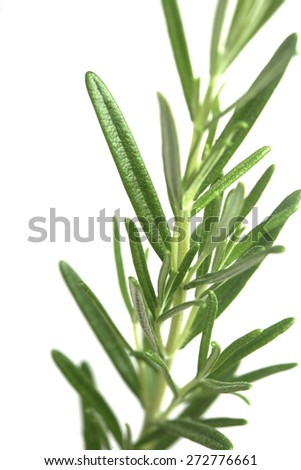 Rosemary on white background - studio shot