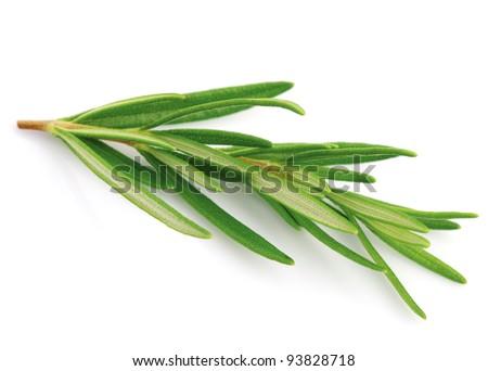 Rosemary spice - stock photo