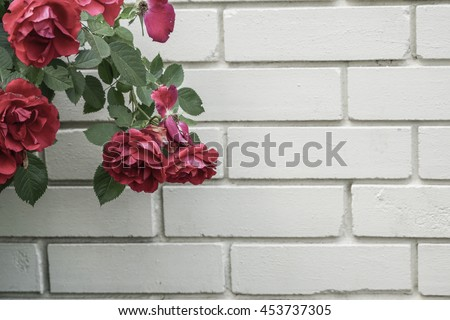 roses against wall - stock photo