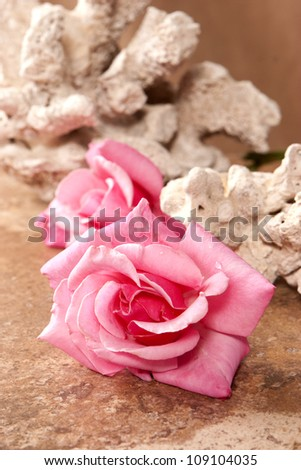 Roses and Coral - stock photo