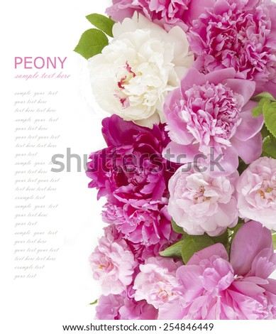 Roses and peony background isolated on white with sample text - stock photo