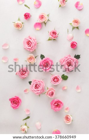 Roses and petals background. Roses and petals scattered on white background, overhead view  - stock photo