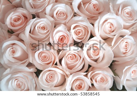 Roses as a background - stock photo
